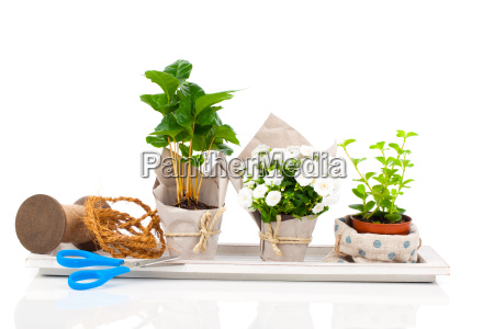 seedlings are offered in the paper