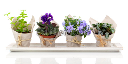 young plants in the paper packaging