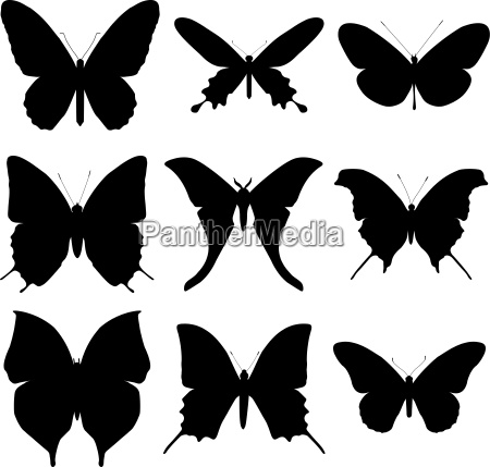 butterfly silhouette set icon collection