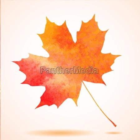 orange watercolor painted vector autumn maple