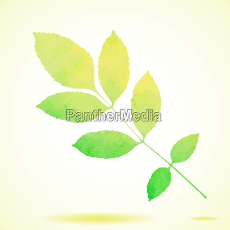 green watercolor painted vector ash tree
