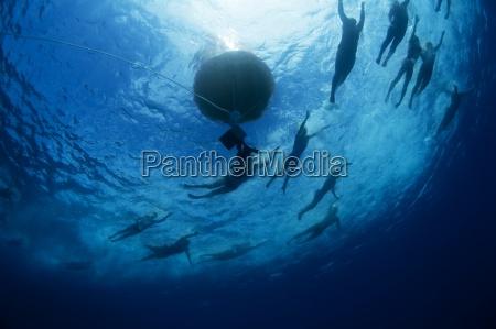 unterwasseransicht der schwimmer einen bouy waehrend