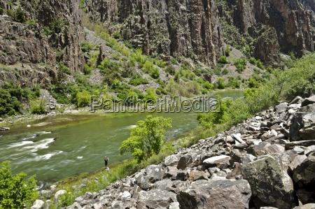 baum nationalpark usa felsen fels gestein