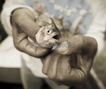 ein piranha in peru