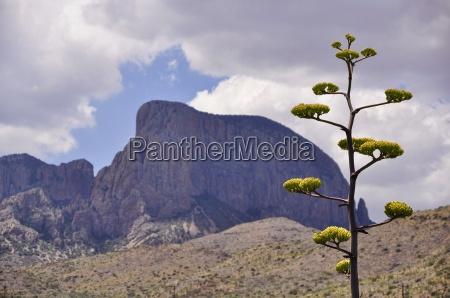 a century plant adorns the mountainous