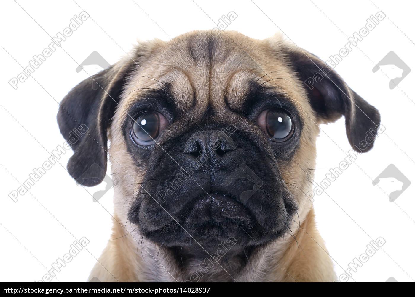 Bildergebnis für weinender hund
