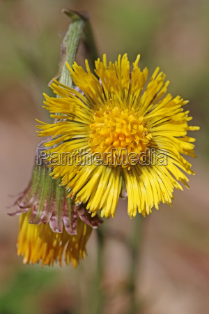 close up of inflorescences in the