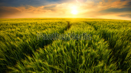 field leads to the sun