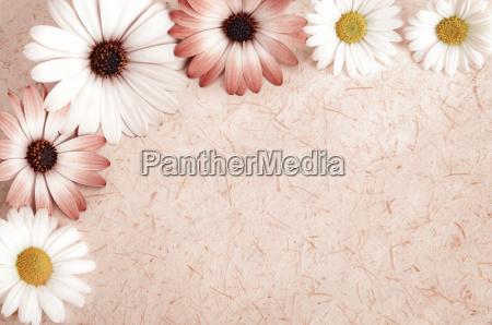 naturpapier hintergrund umrahmt mit blumen