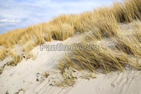 golden dune graes pa ostersoen