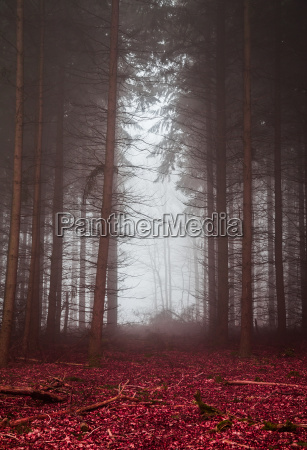 dunkler wald im nebel mit rotem