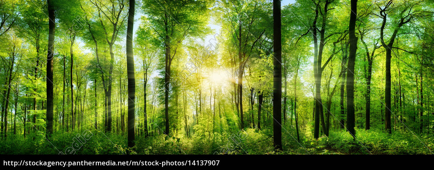 wald, panorama, mit, sonnenstrahlen - 14137907