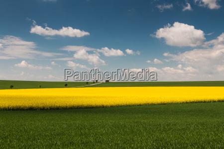 landschaft mit rapsfeld
