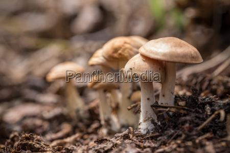 pilz schwammerl champignon wald forst