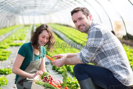 landwirt lehrt neuen angestellten zum gartenbau