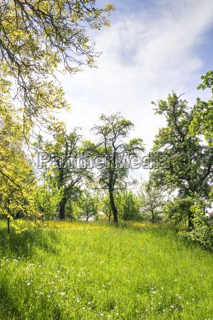 grass and trees on the michelsberg