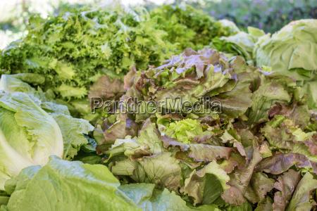 fresh salad salad lettuce vegetables green