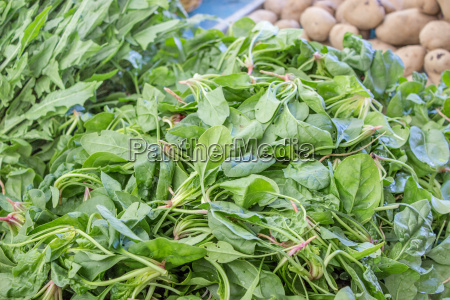 spinach leaves spinach leaves healthy eating