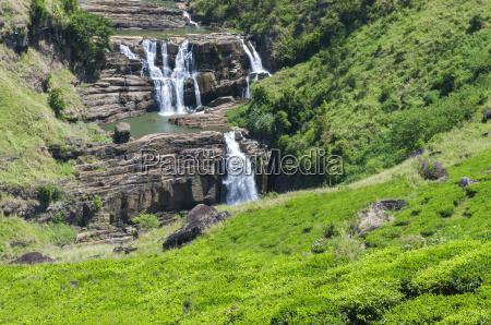 tea plantation with waterfall