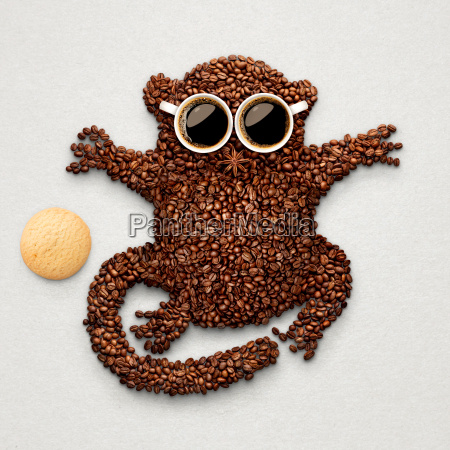 tarsier with cookie