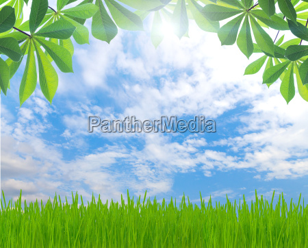 beauty green leaf and grass spring