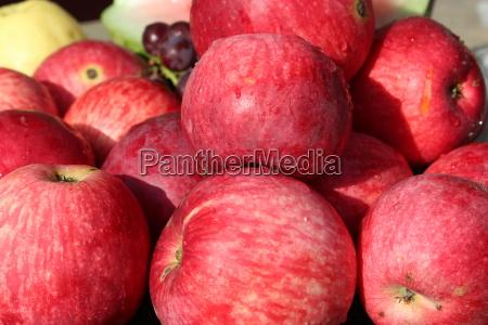 reif lese frucht obst aepfel apfel
