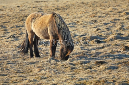 horse grazing on a field
