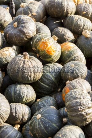 green gruener hokkaido cucurbita pumpkin kuerbis