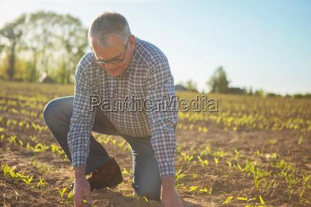 farmer aelterer in der landschaft ueberpruefung