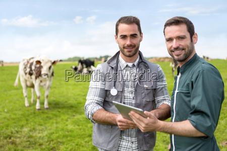 farmer und veterinaer arbeiten gemeinsam in
