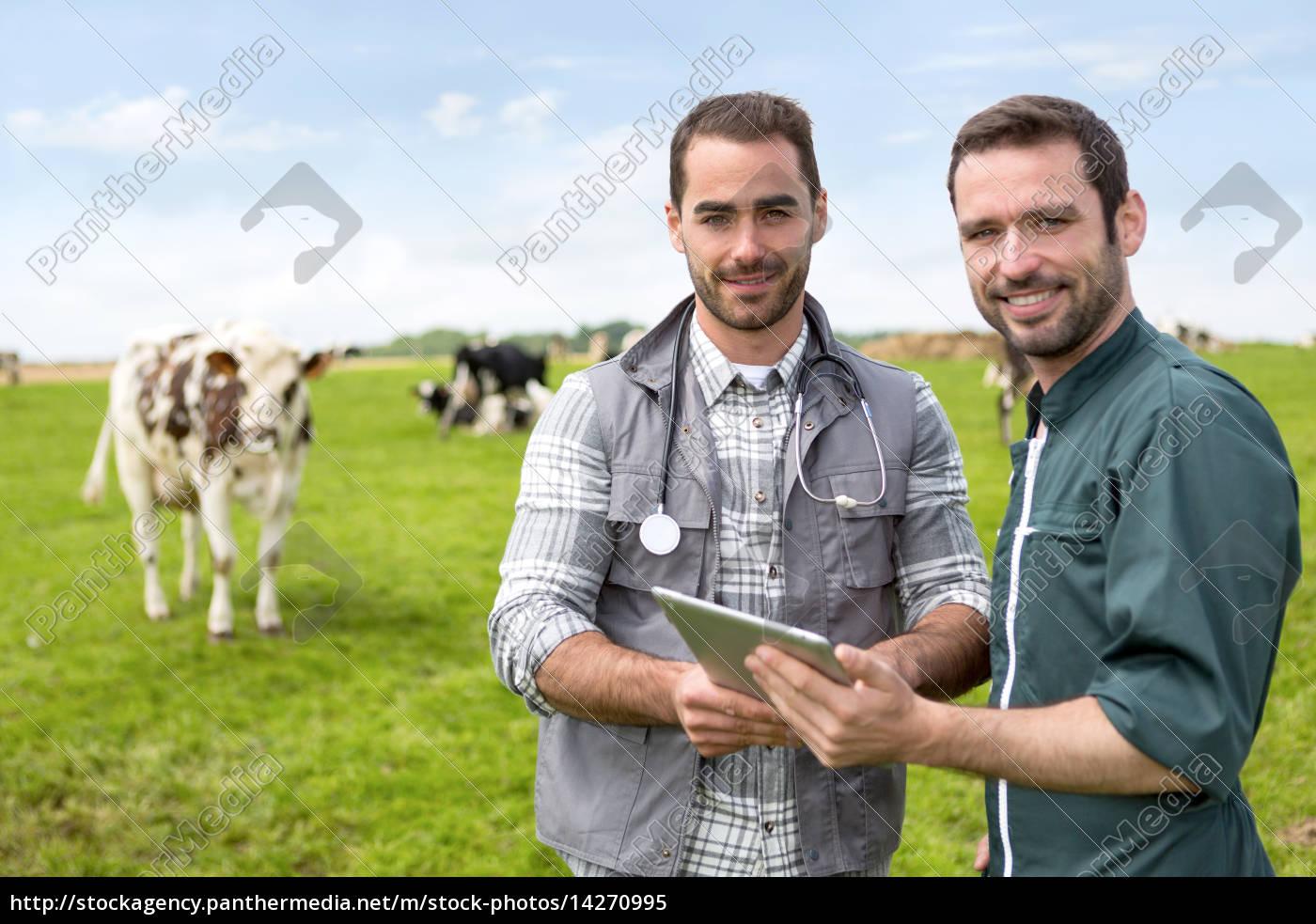 farmer, und, veterinär, arbeiten, gemeinsam, in - 14270995