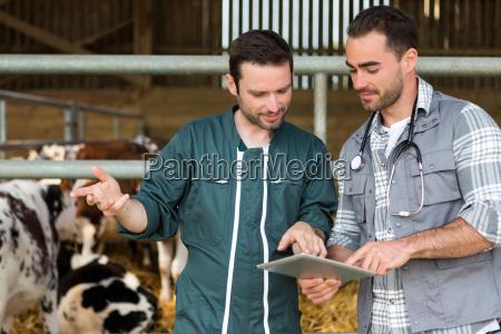 farmer und veterinaer arbeiten zusammen in