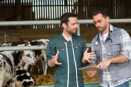 farmer and veterinary working together in