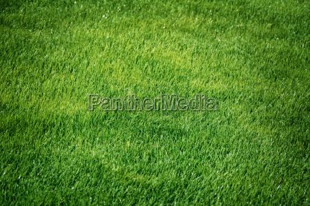 gruenes gras