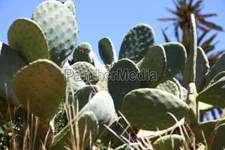 prickle thorns cacti cactus sting plant