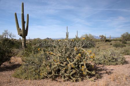 lost dutchman state park arizona usa