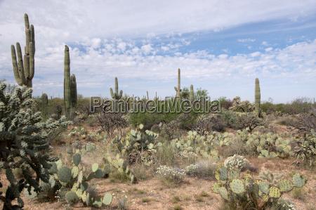 saguaro nationalpark arizona usa