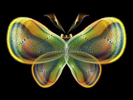eleganz von butterfly