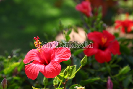 flower plant flowers canary islands nature