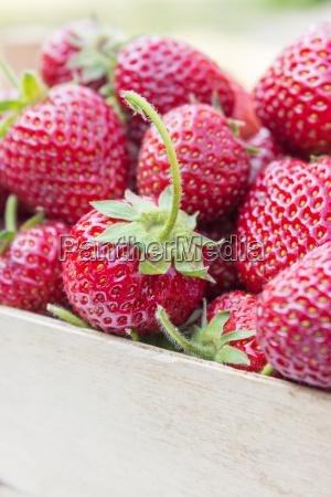 strawberries berries fruits fruit red ripe