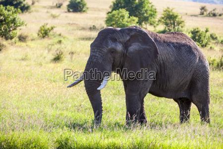 elefanten familie zu fuss in der