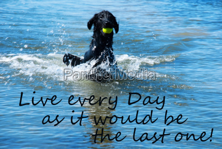 dog, play, with, ball, in, water - 14363217