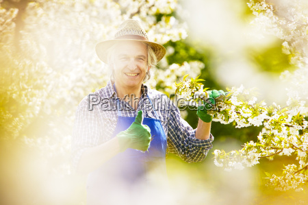 gardener cherry blossom control good