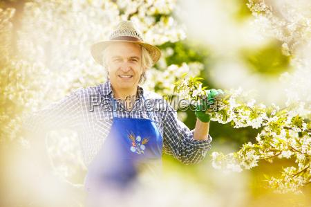 gardener cherry blossom hat branch