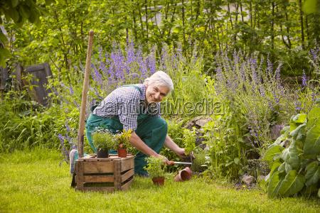 man gardening spade box