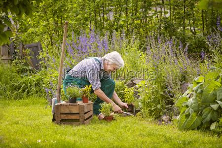 man gardening dig
