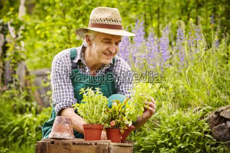 man hat seedlings garden