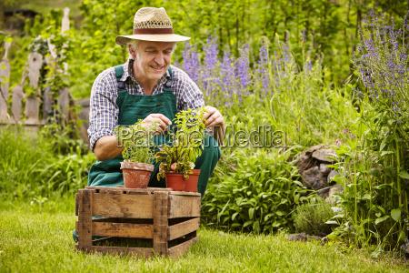 gardeners garden seedlings