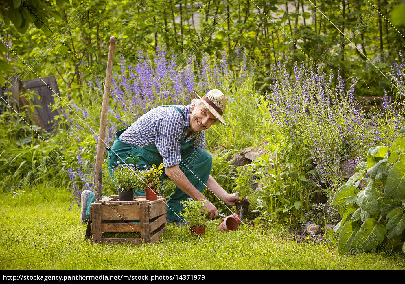 Lizenzfreies Bild 14371979   Mann Garten Pflanzen