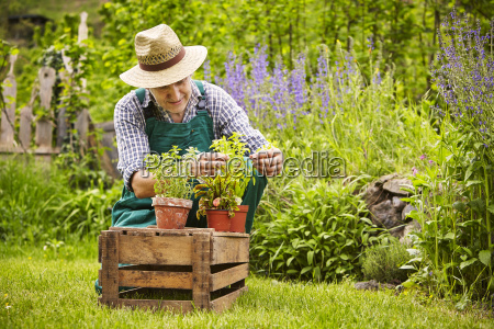 man herb plant garden